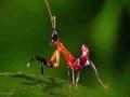 Kung Fu Mantis Vs Jumping Spider - English