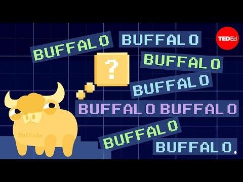 Buffalo buffalo buffalo: One-word sentences and how they work - Emma Bryce - English