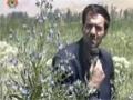[04 Mar 2013] Natural weeds and Cure - قدرتی جڑی بوٹیاں اورعلاج - Urdu
