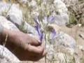 [13 Mar 2013] Natural weeds and Cure - قدرتی جڑی بوٹیاں اورعلاج - Urdu