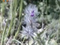 [17 Mar 2013] Natural weeds and Cure - قدرتی جڑی بوٹیاں اورعلاج - Urdu