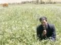 [16 Mar 2013] Natural weeds and Cure - قدرتی جڑی بوٹیاں اورعلاج - Urdu