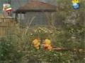 [07 Episode   قسمت] Khuneye Madar Bozorge - خونه مادربزرگه - Farsi